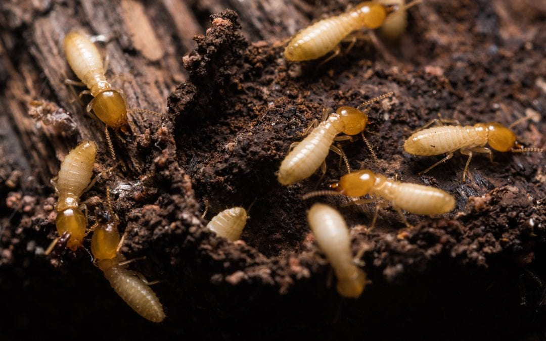 4 Methods to Prevent Termites